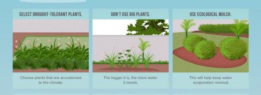 Save water in your garden by using drought resistant plants