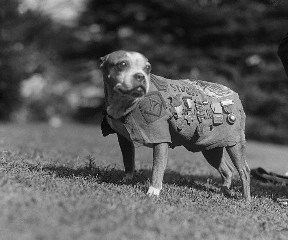 Who was the first war dog?