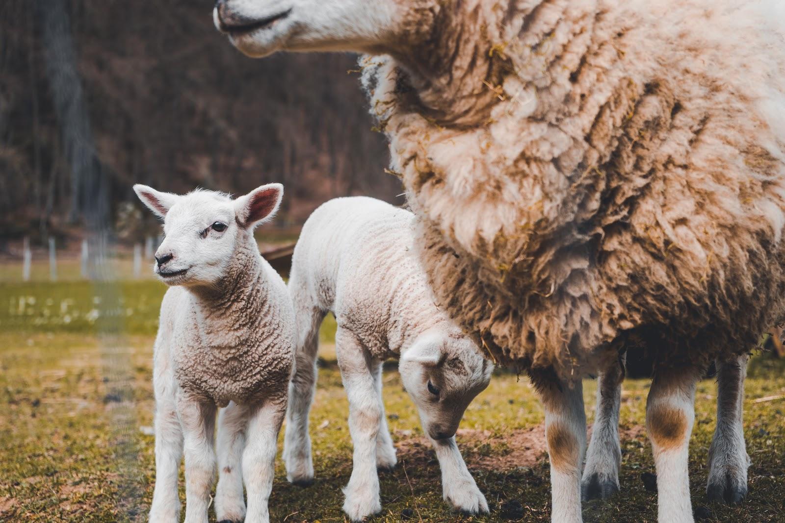 отказ от эксплуатации животных