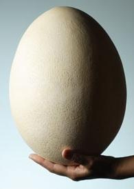 D:\Articles\முட்டையா கூமுட்டையா\del-eggs-ostrich-egg-mdn.jpg