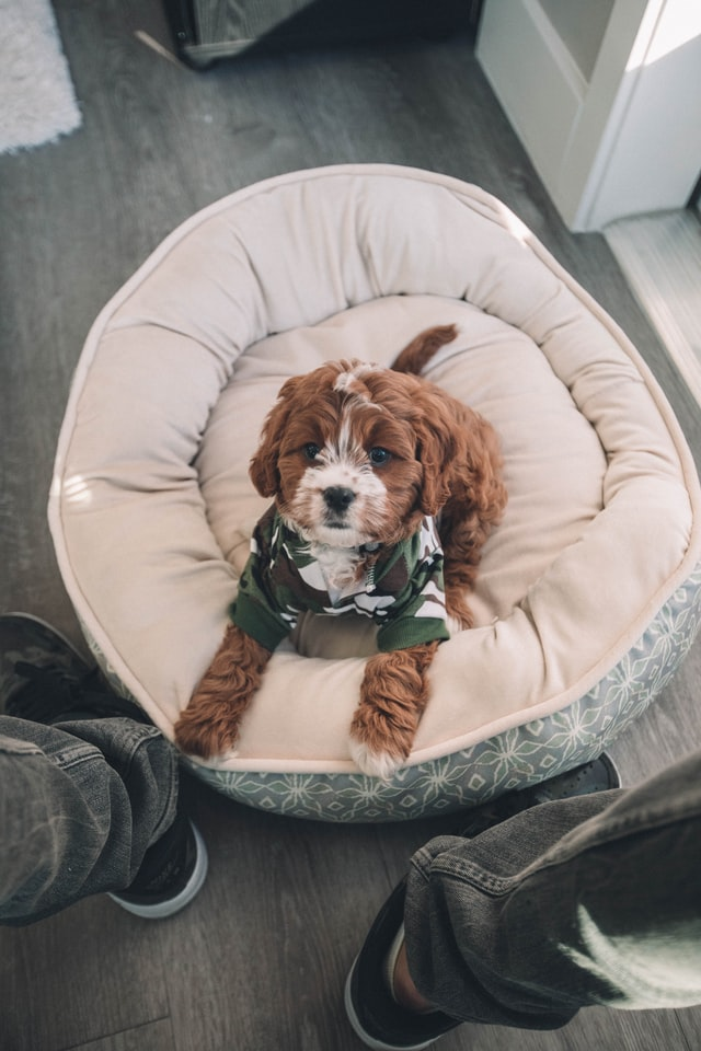 7 Cute Dog Bed Ideas You Can Make in a Flash