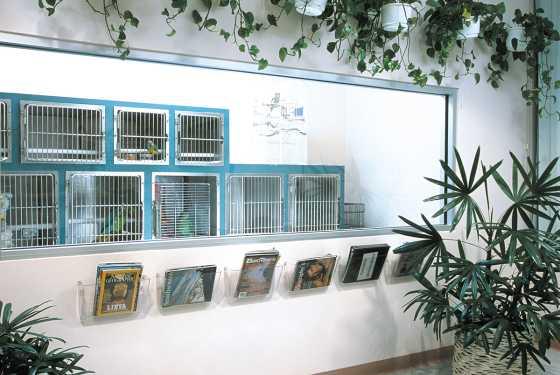 Boarding facility at an avian veterinary hospital
