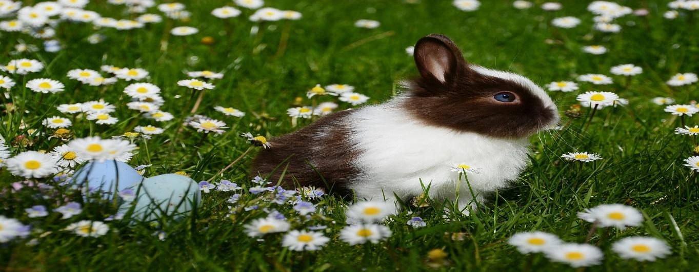 A picture containing grass, outdoor, flower, mammal  Description automatically generated