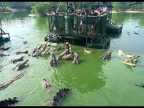 Image result for crocodiles