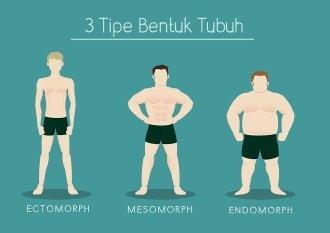tipe bentuk tubuh
