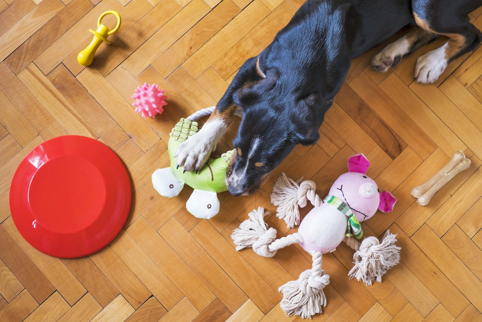A dog on the floor playing with a variety of toys.