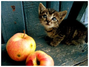 can cats have Apple Cider Vinegar