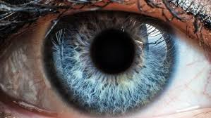Resultado de imagen de cornea