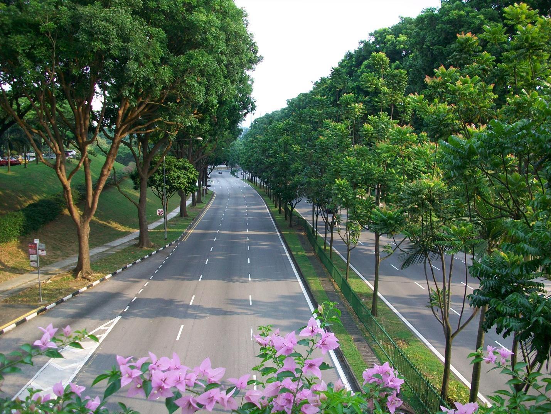 Dịch vụ cắt tỉa cây tại Tây Ninh thu hút nhiều người sử dụng