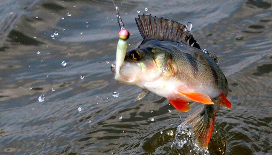 Рыбалка на окуня на Днепре