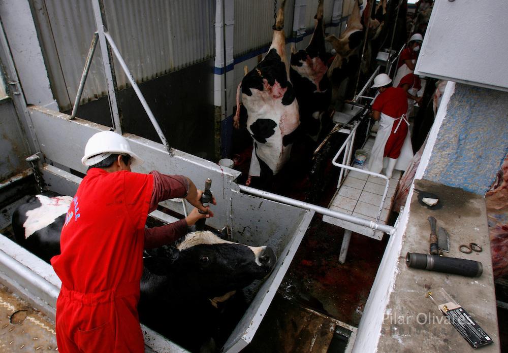 dairy cows killed.jpg