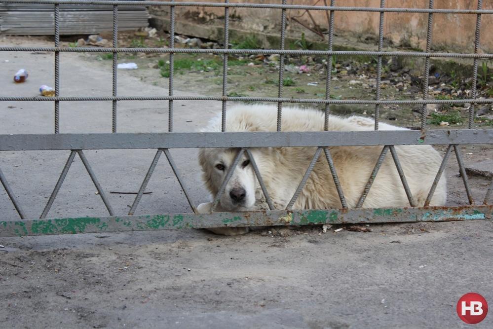 Сторожевой пес СИЗО не рад журналистам