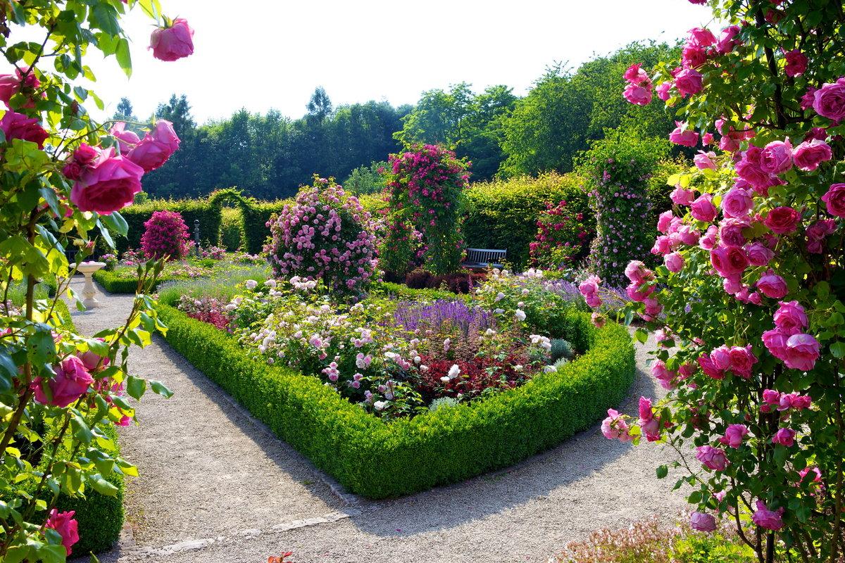 Где посадить розы