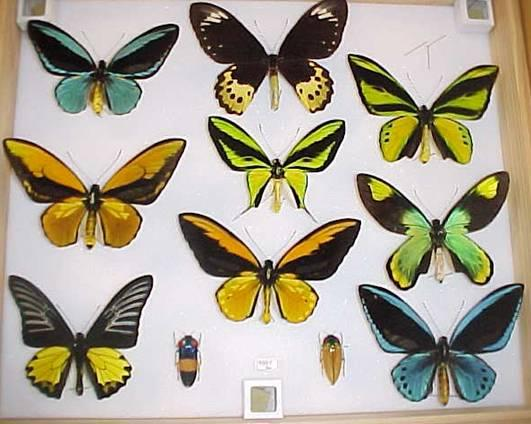 http://drkaae.com/InsectCivilization/assets/Chapter_15_Butterflies_and_Moths._files/image009.jpg