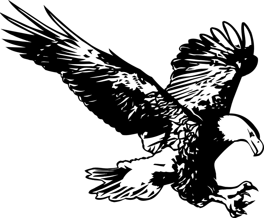 Free vector graphic: Eagle, Black And White, Birds - Free Image on ...