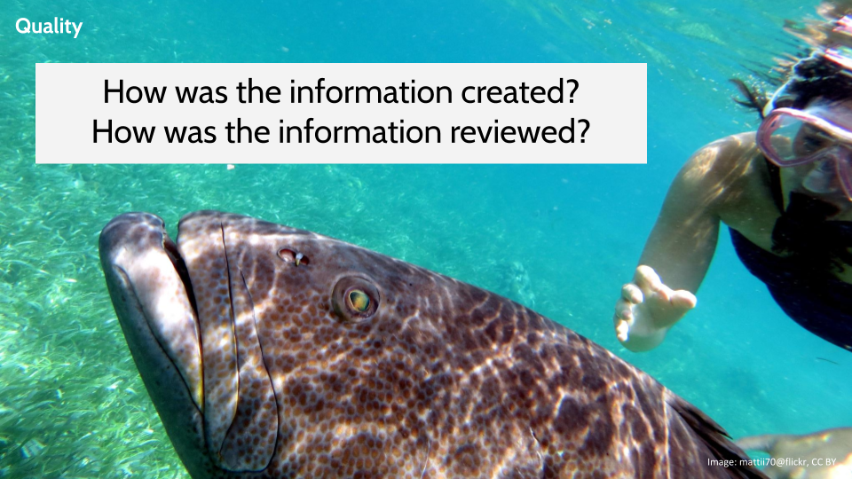 Image of a snorkeler with a big fish in the foreground with the questions: How was the information created? How was the information reviewed?
