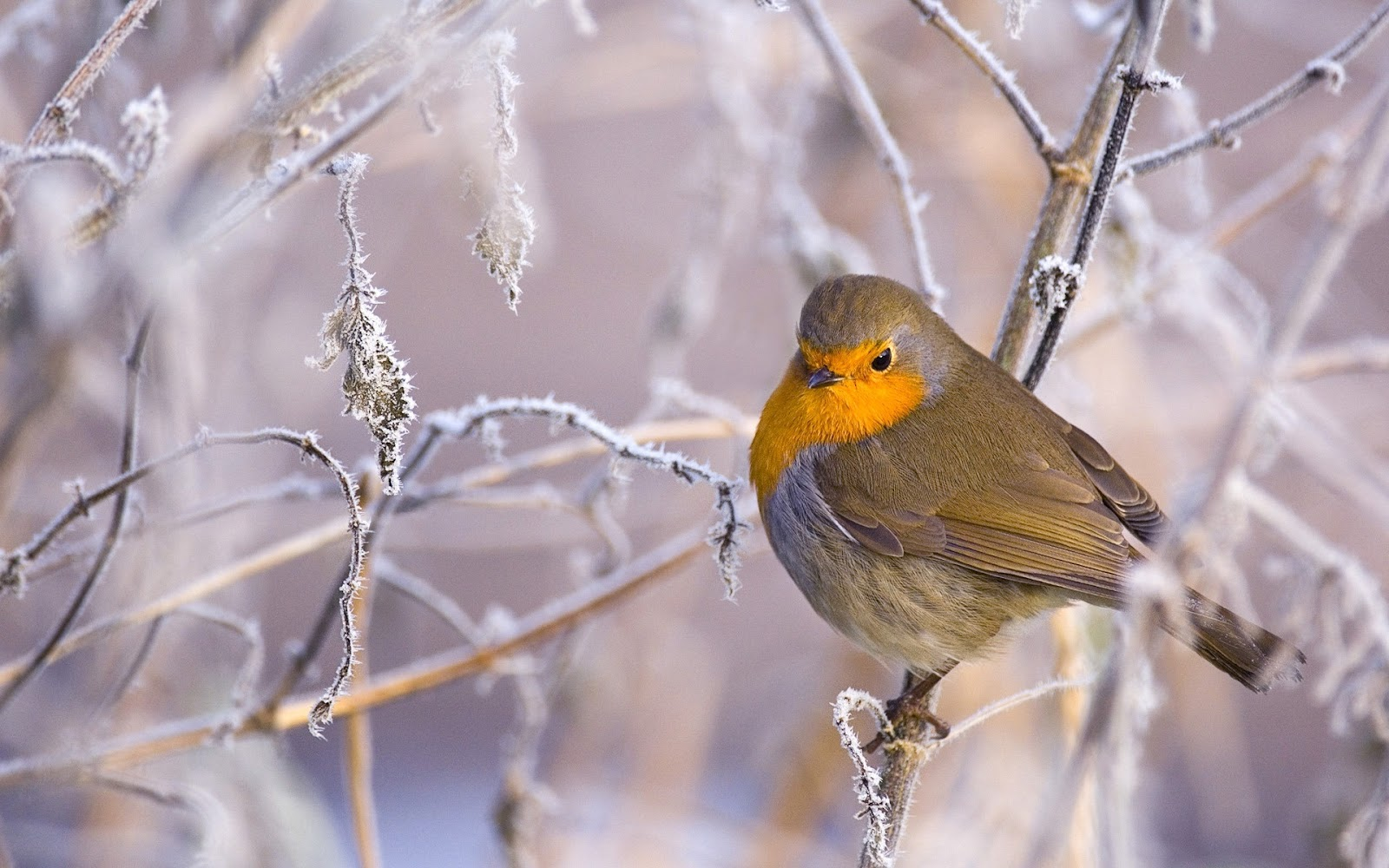 Bird-Branch.jpg