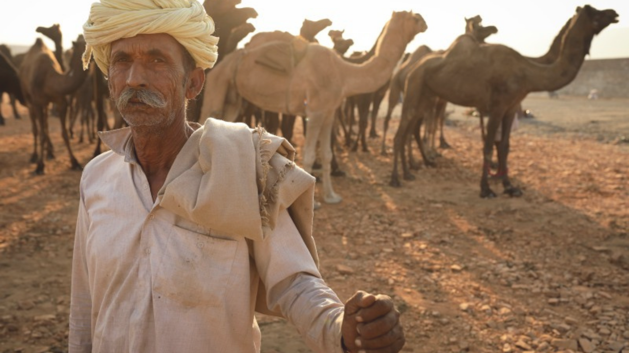 Why do we need to Support Camels and their Herders?   Aadvik Foods