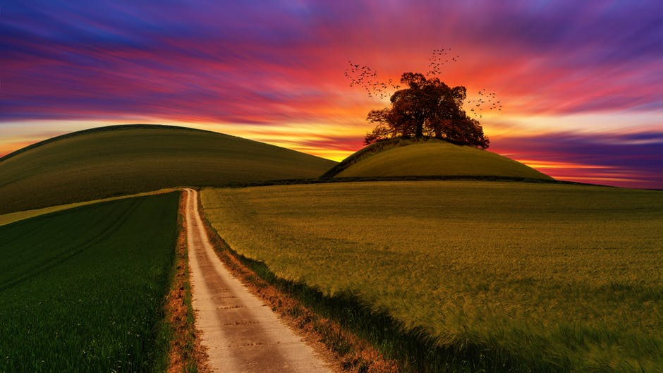 Field and sunset.