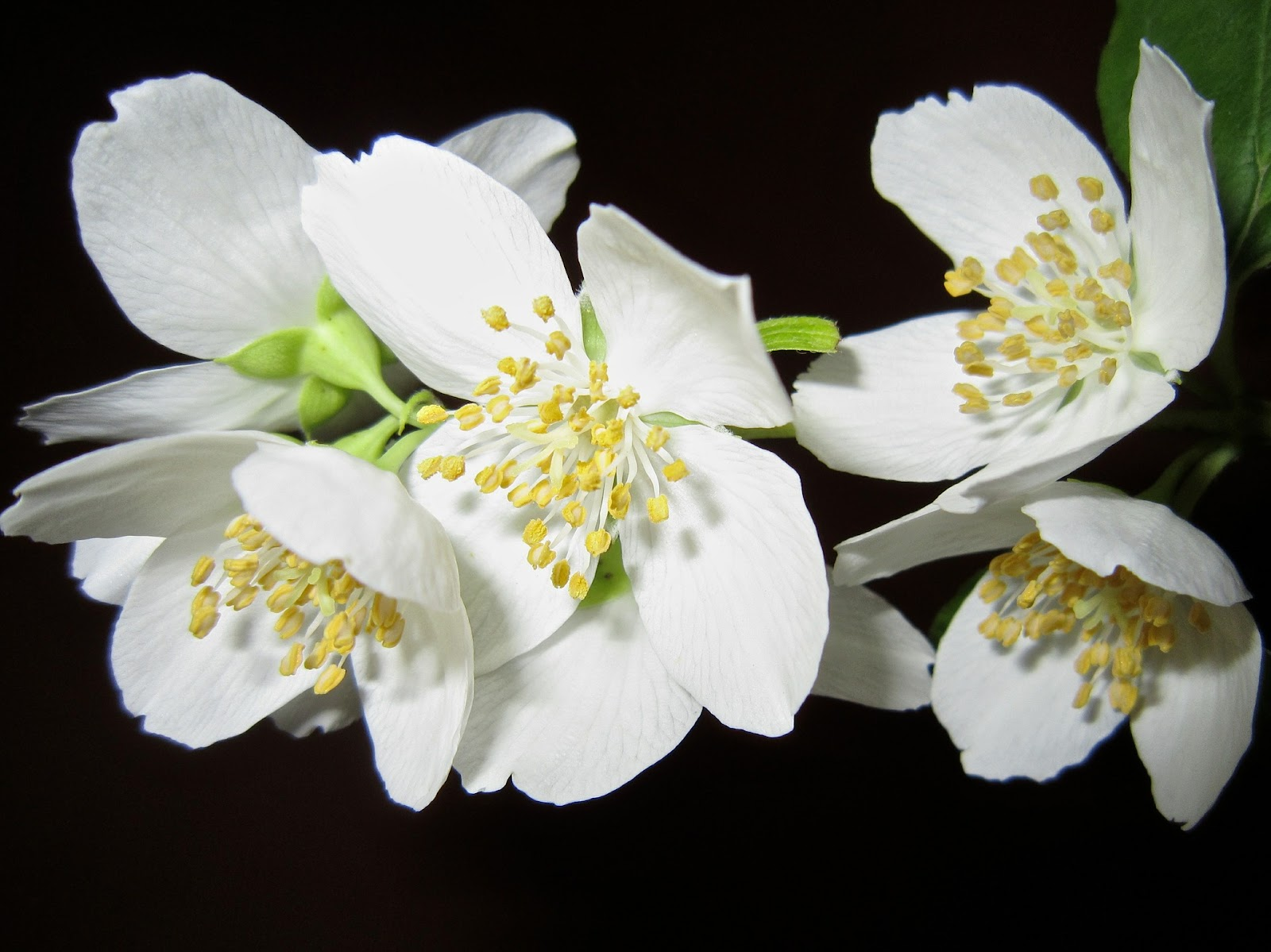 Le jasmin c'est joli, mais ça vous plombe une dégustation