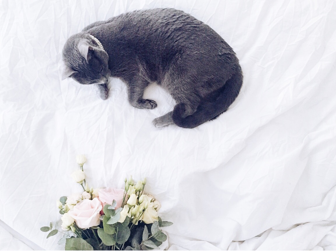 10 ways to introduce your pet to your new baby cat flowers