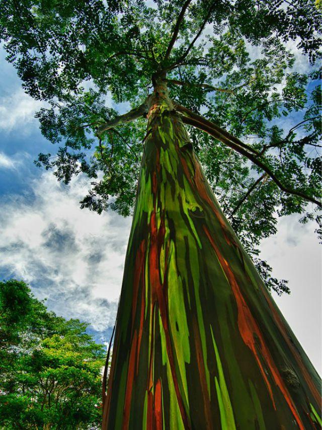 1_amazing-trees-14.jpg