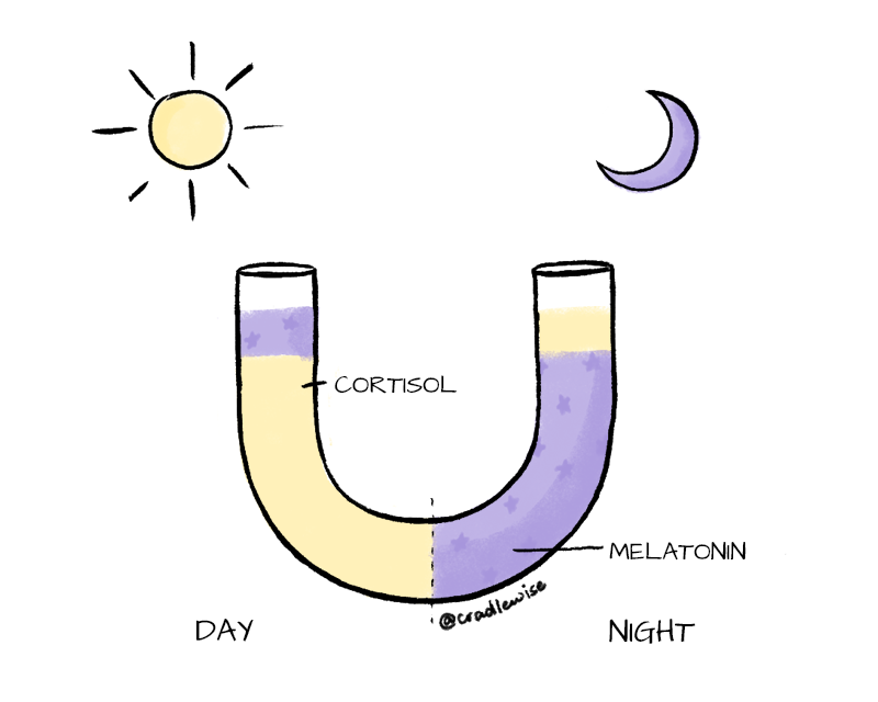 U-shaped diagram showing difference in cortisol and melatonin levels during day and night.