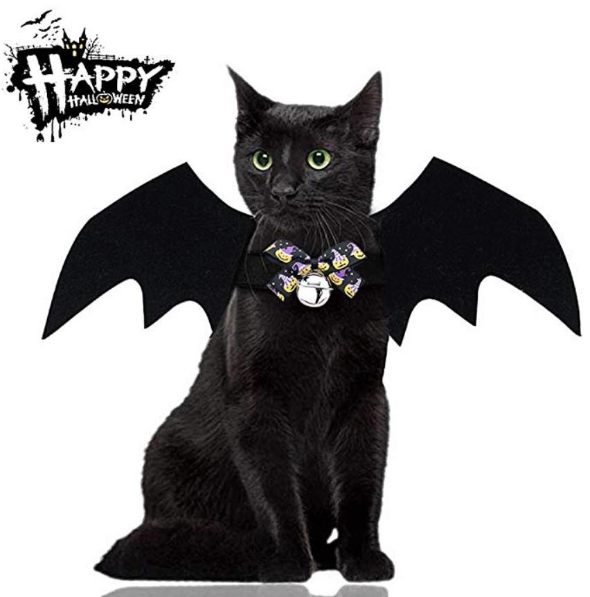 bat cat halloween costume