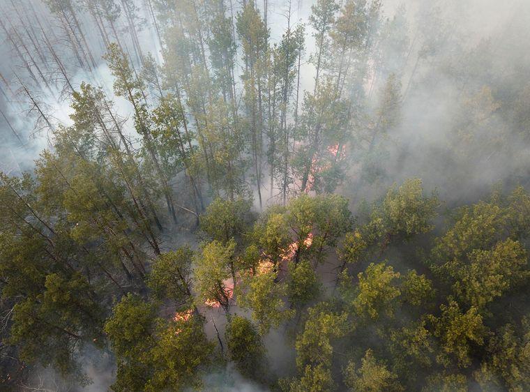 Лесной пожар в Котовском лесничестве возле села Владимировка в Чернобыльской зоне отчуждения, 5 апреля 2020 года
