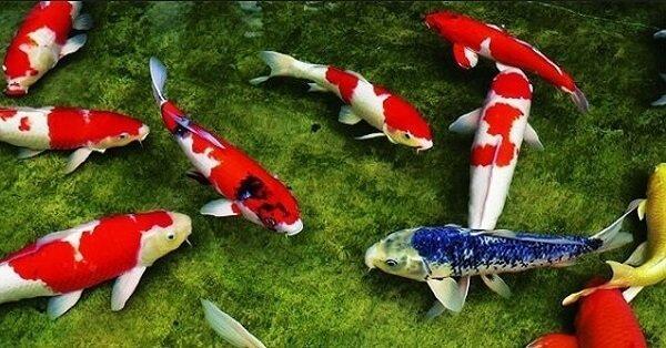 Mơ thấy cá lội dánh con gì hơp lý nhất