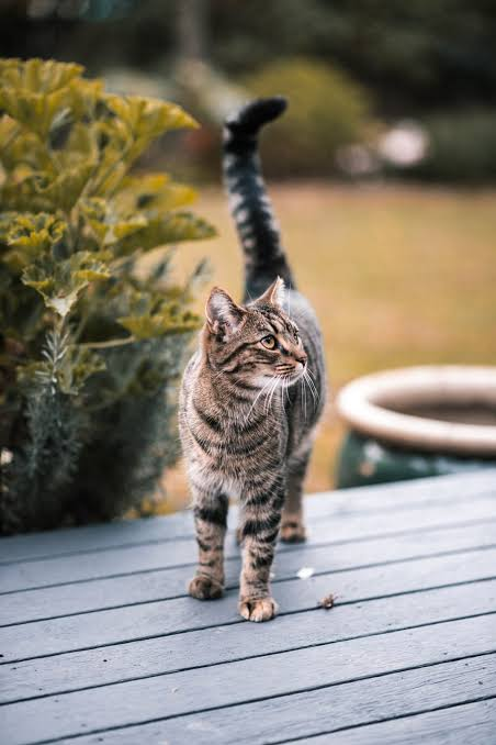 Are cats better than dogs
