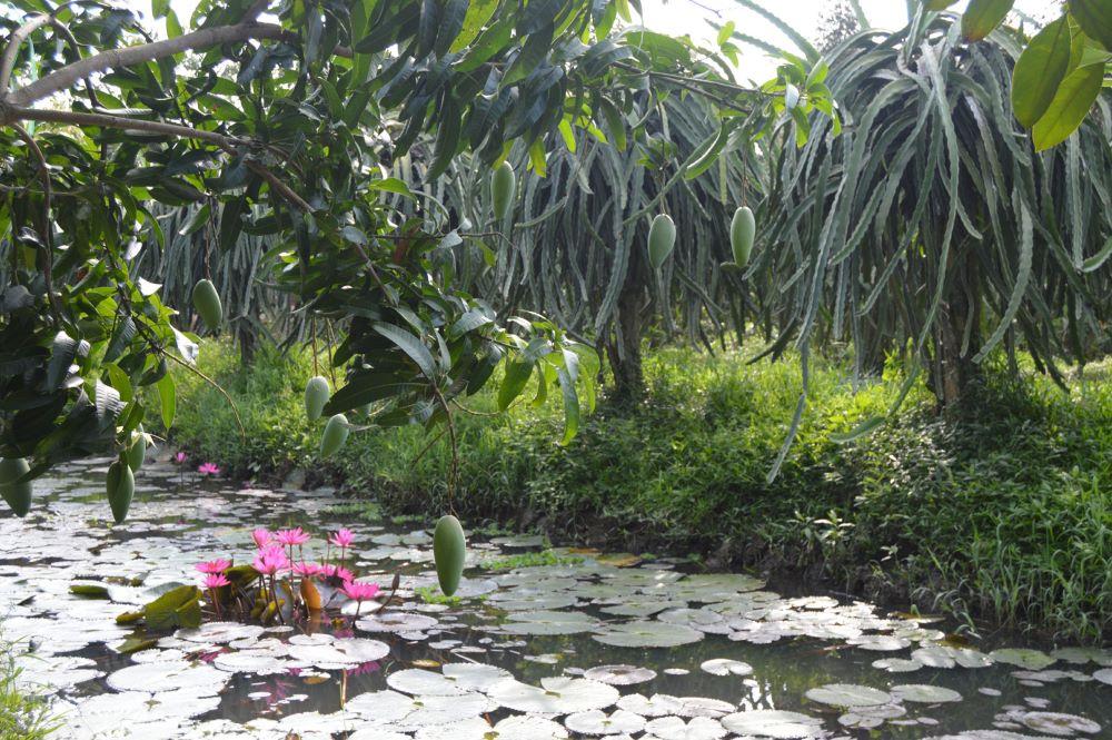 Vườn trái cây Ba Cống