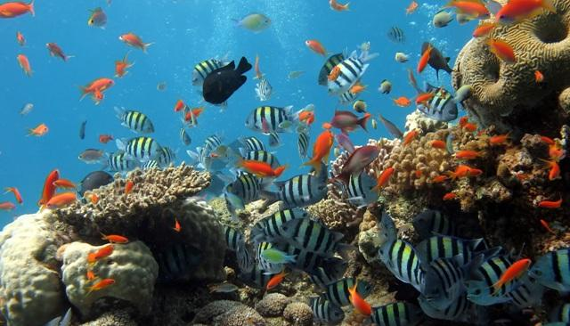 các rặng san hô tại cô tô