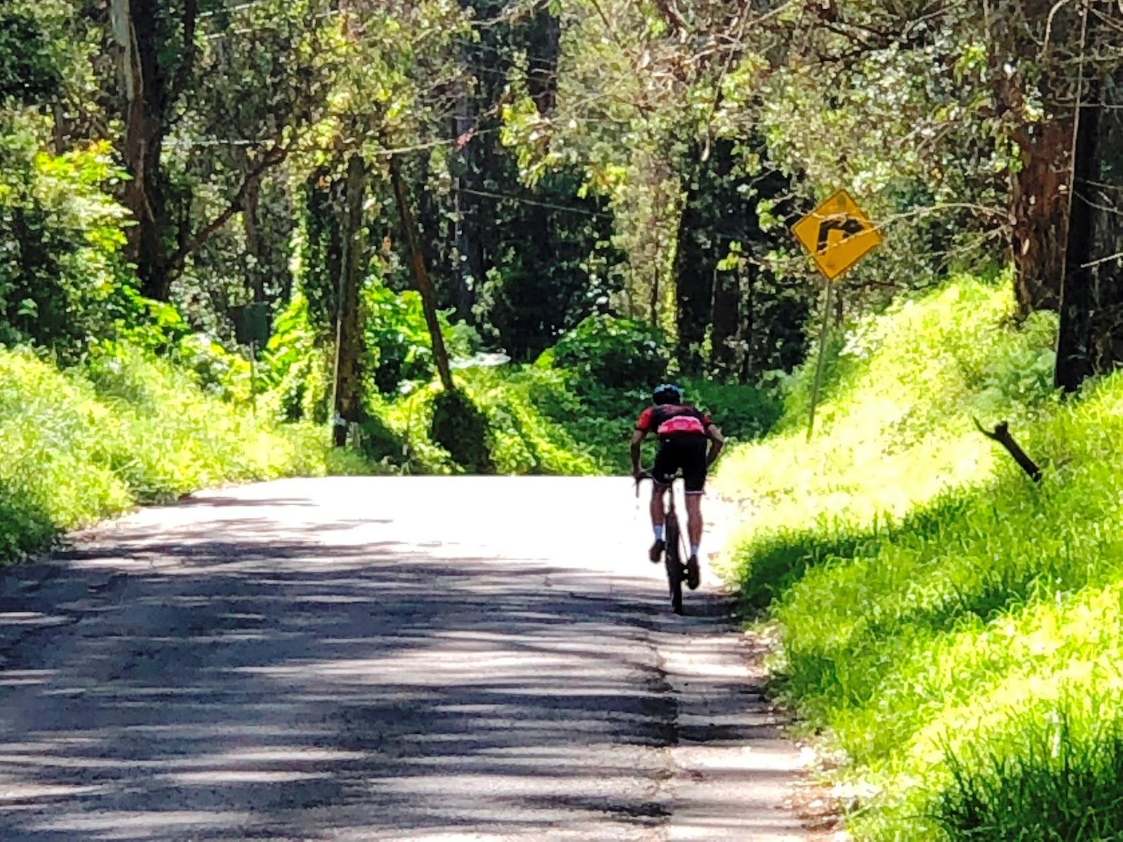 Cyclists climbing steep section of Waipoli Road by bike.