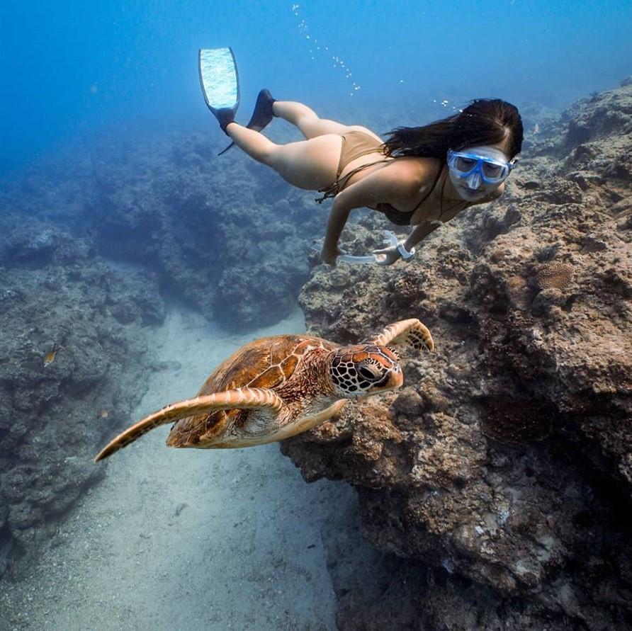 龍蝦洞、軟珊瑚區、鋼鐵礁