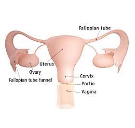 tanda-tanda hamil 1 minggu