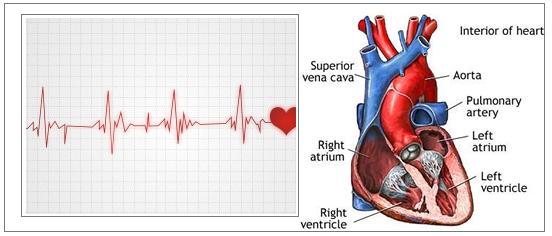 NCLEX 26 Cardiac System | NCLEX Review & Nursing School