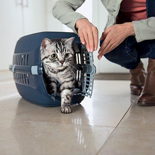 """ésultat de recherche d'images pour """"chaton caisse de transport"""""""