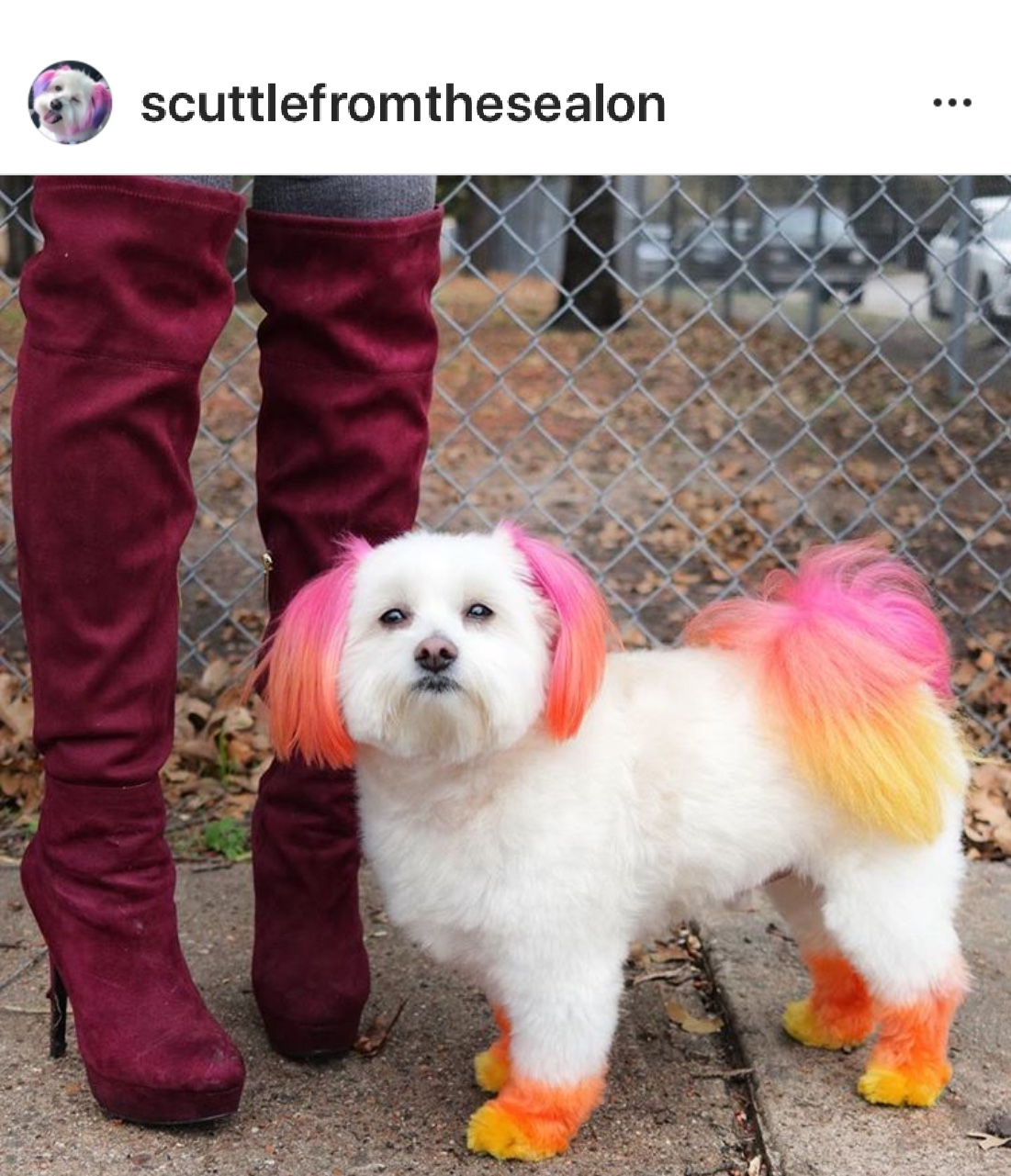 Instagram Screenshot of puppy Fashion color!