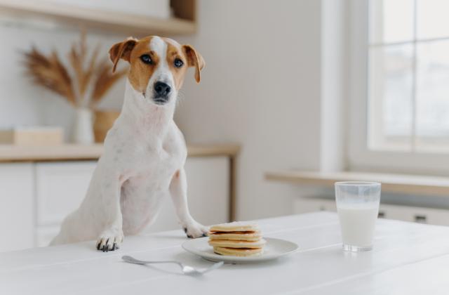 Sữa cho chó mẹ cũng vô cùng cần thiết