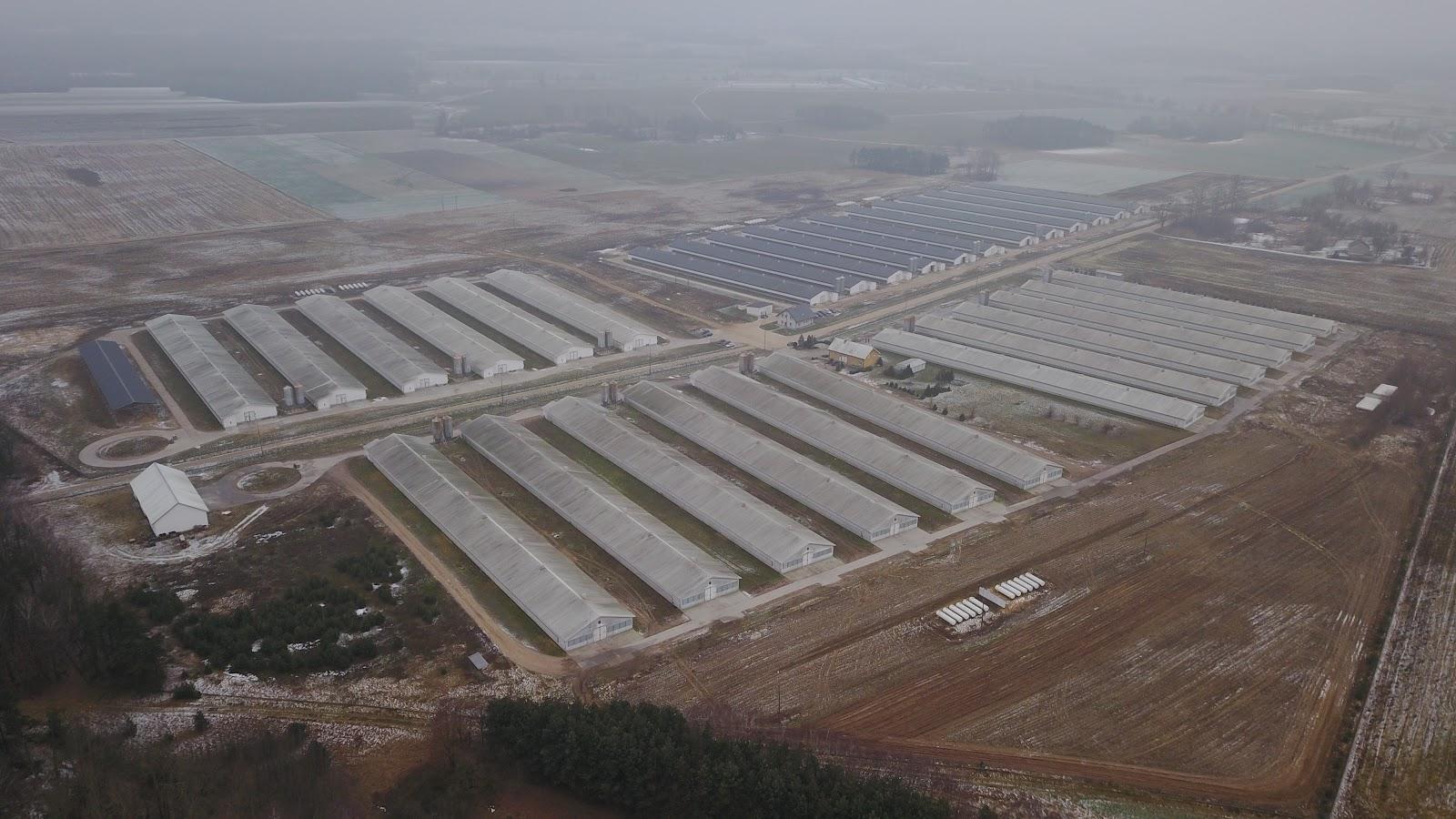 Raport ZOBSiE: fermy przemysłowe generują olbrzymie koszty ukryte.