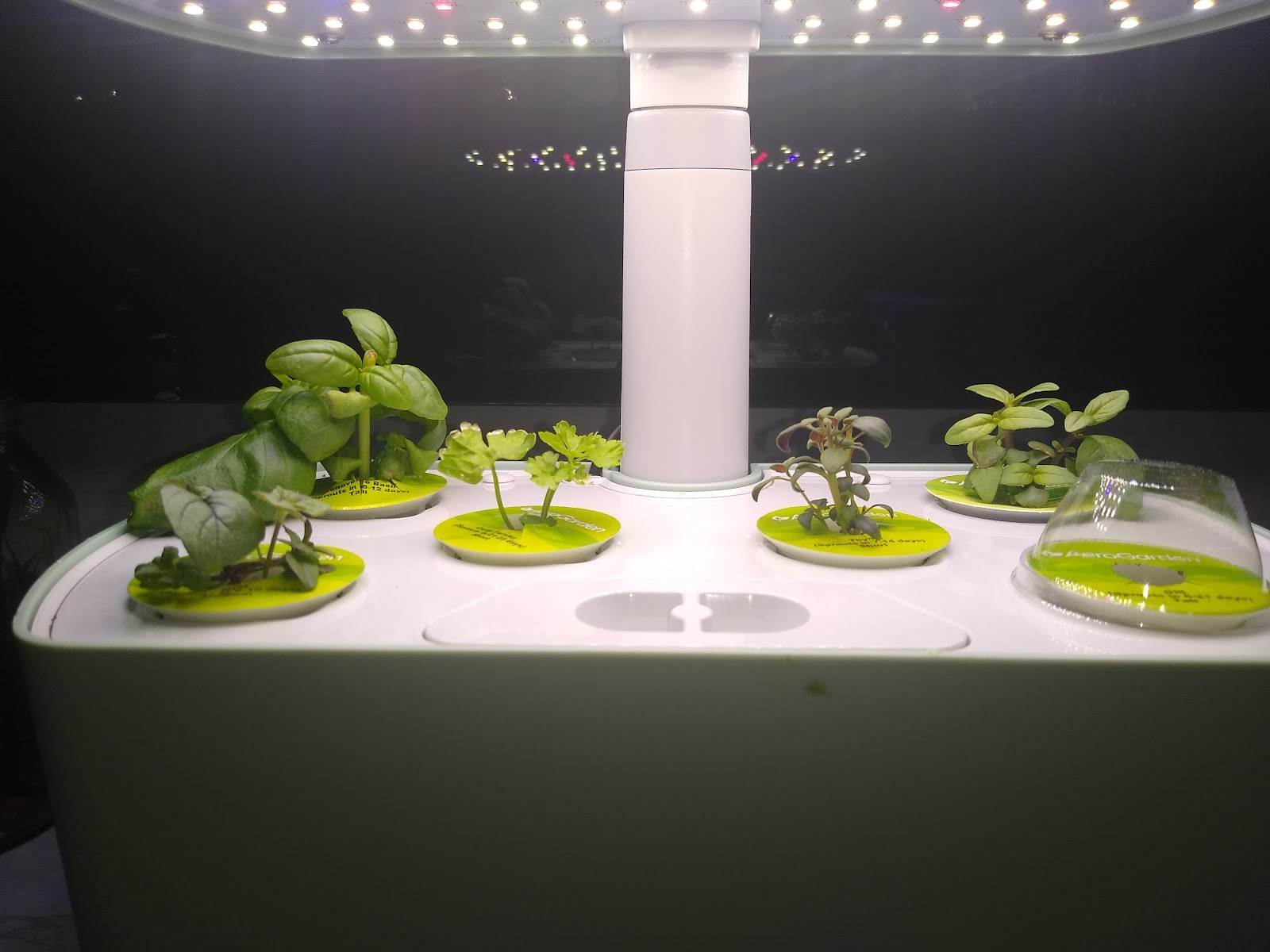 AeroGarden Harvest picture