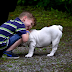 Nurturing The Family Bond: Bringing A Pet Home