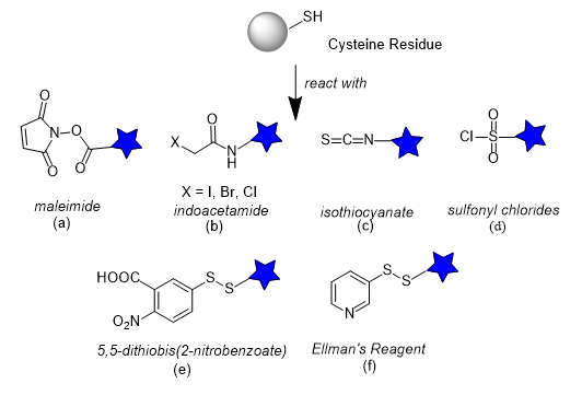 Cysteine reactive functional groups for proteins