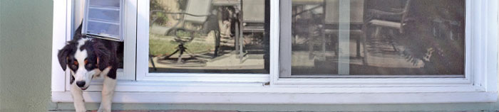 A sliding glass dog door can be a great addition for you, your dog and your home.
