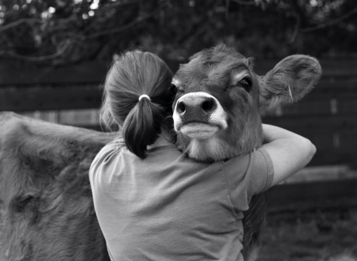 Mitos y realidades sobre el veganismo