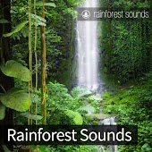 Rainforest Sounds