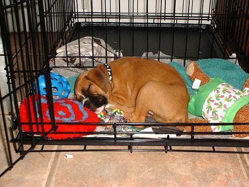 Puppy-crate.jpg