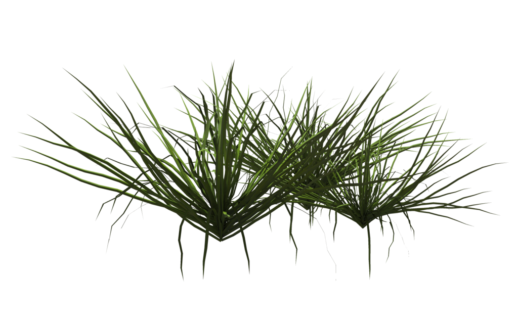 grass_06_by_wolverine041269-d643vlb.png