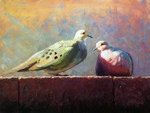 Image result for wild  dove  oilpainting small size
